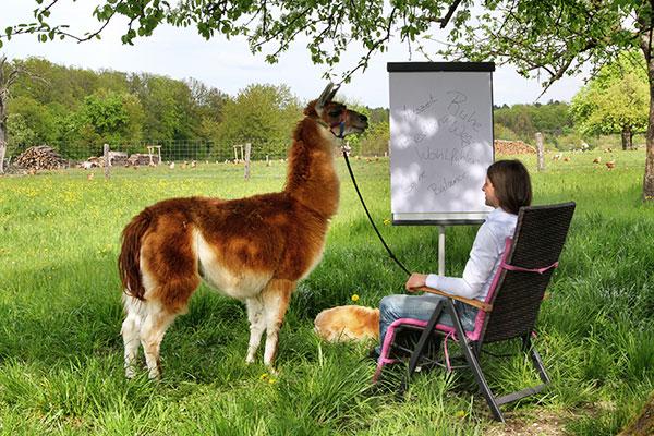 Präsenz-Workshop mit Lamas